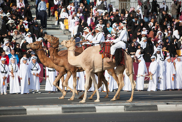 Qatar National Day parade camels