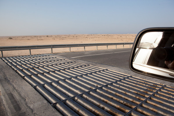 Camel protection on Qatar roads
