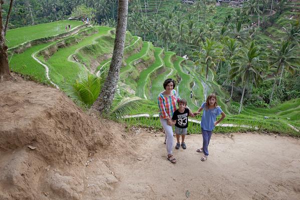 Rýžová pole Bali Ubud