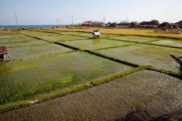 Rýžová pole Bali