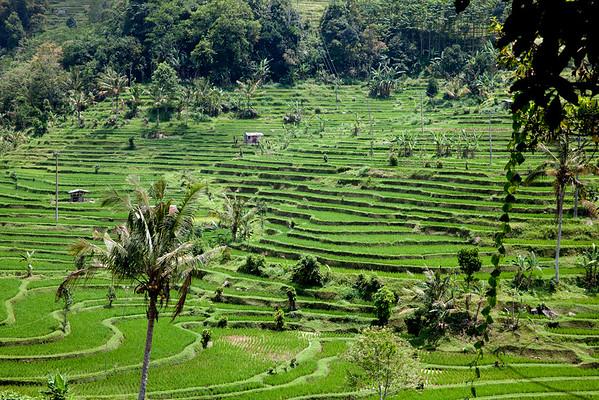 Bali rýžová pole Jatiluwih