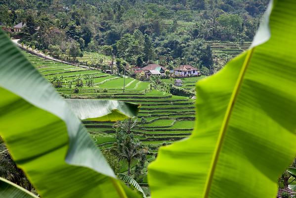 Jatiluwih rýžová pole Bali