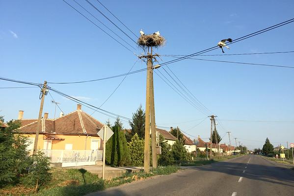 Čápi v Rumunsku